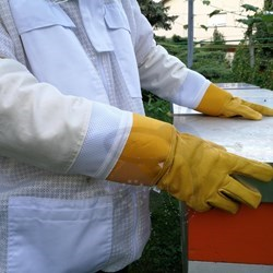 Picture of Acid resistant beekeeping gloves