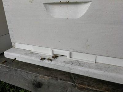 Bee corridor
